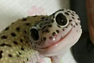 pixelnom's avatar