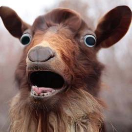 Goat Gang CCNJ's avatar