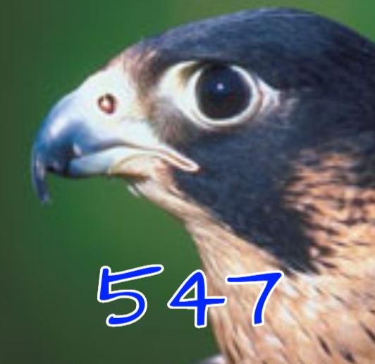 Raptor547's avatar