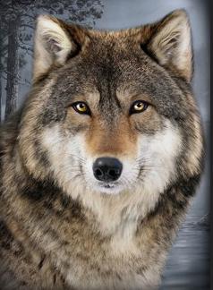 Spartan0718's avatar