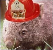 Wombat's avatar